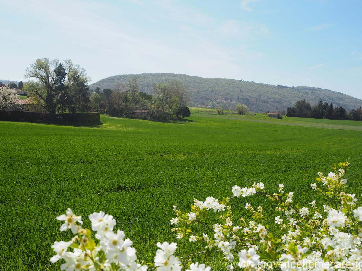 Champs verdoyant, vue sur montagne dans la cammpagne de Dauphin, maison gérée par l'agence Provence Home care