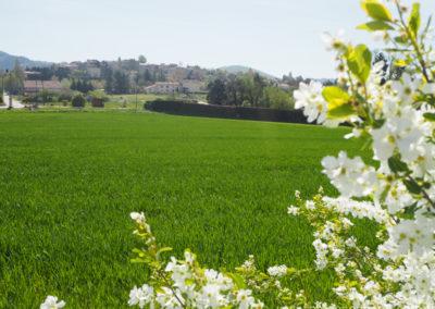 Champs verdoyant avec fleurs, vue sur le village médiéval de Dauphin dans le Luberon, maison gérée par l'agence Provence Home care