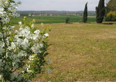 Champs et fleurs dans la campagne de Dauphin dan le Luberon, maison gérée par l'agence Provence Home care